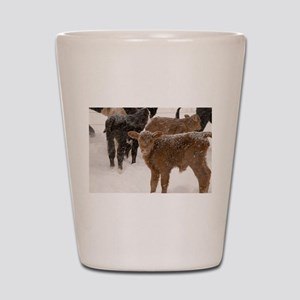 Calves in The Snow Shot Glass