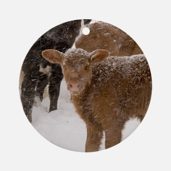 Calves in The Snow Round Ornament