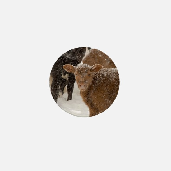 Calves in The Snow Mini Button