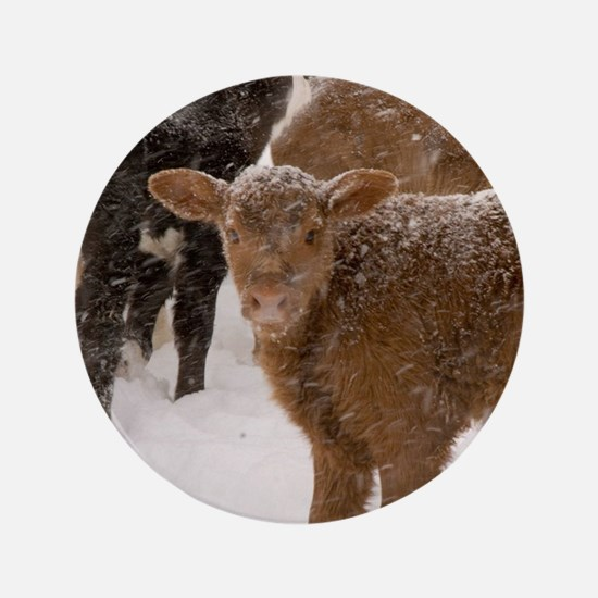 """Calves in The Snow 3.5"""" Button (100 pack)"""