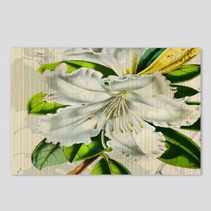 french botanical white li Postcards (Package of 8)