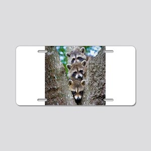 Baby Raccoons Aluminum License Plate