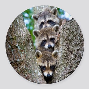 Baby Raccoons Round Car Magnet