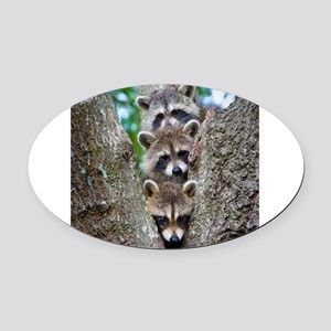Baby Raccoons Oval Car Magnet