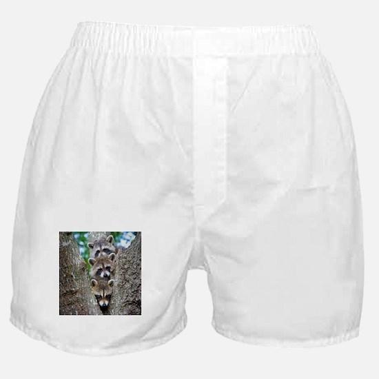 Baby Raccoons Boxer Shorts