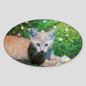 Cat Sticker (Oval)