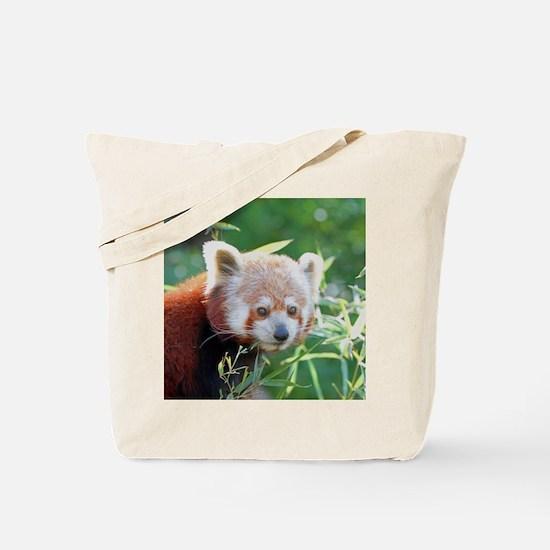 RedPanda20150805 Tote Bag