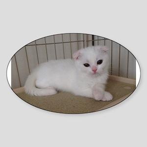 scottish fold white kitten Sticker