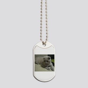 laying 2 scottish fold Dog Tags