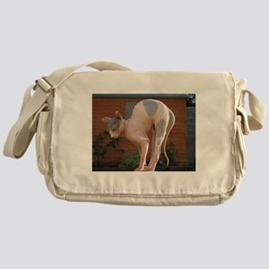 sphynx stretching Messenger Bag