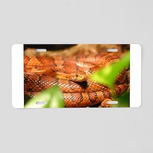 sunkissed corn snake Aluminum License Plate