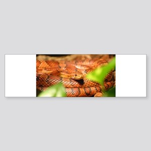 sunkissed corn snake Bumper Sticker