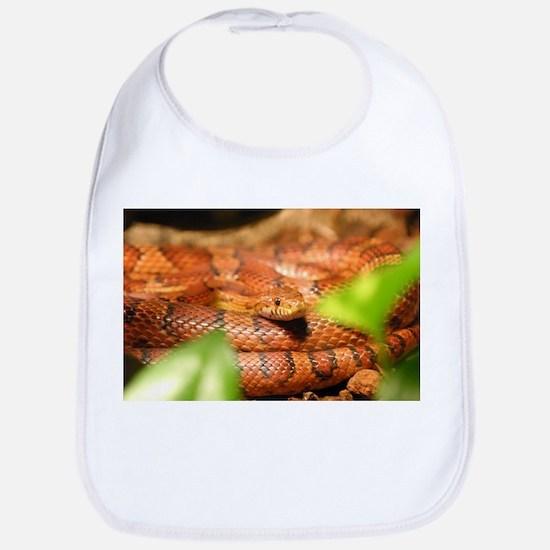 sunkissed corn snake Bib