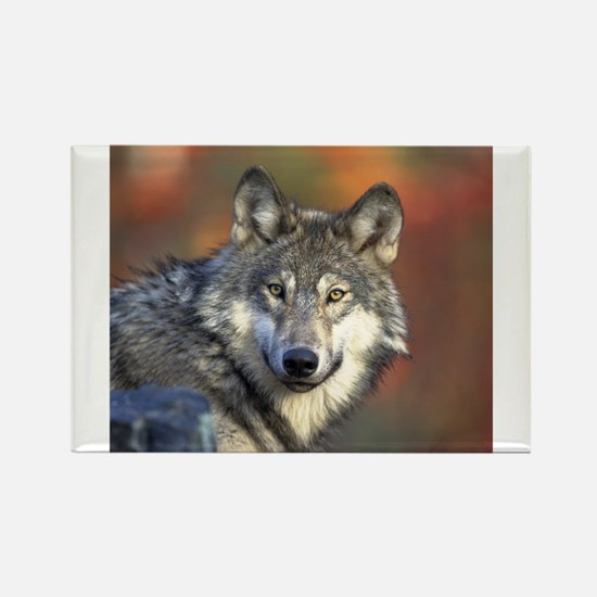 Wolf 022 Magnets
