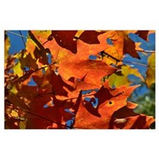 Fall , Nature, Leafs  Poster