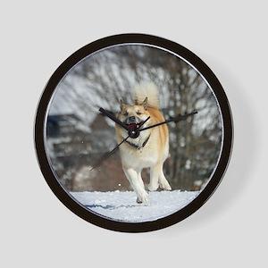 IcelandicSheepdog016 Wall Clock