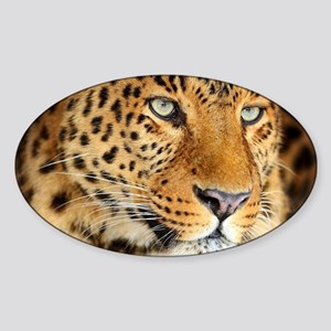 Leopard Portrait Sticker