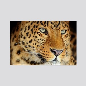 Leopard Portrait Magnets