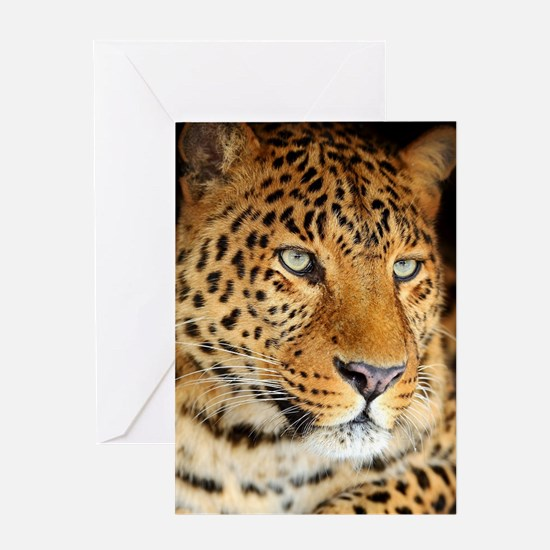Leopard Portrait Greeting Cards
