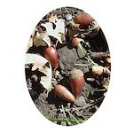 Acorns Oval Ornament