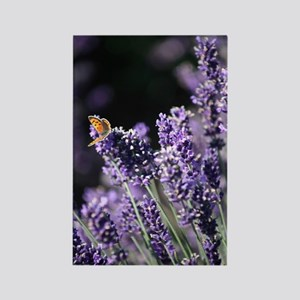 Lavender ButterflyO Rectangle Magnet