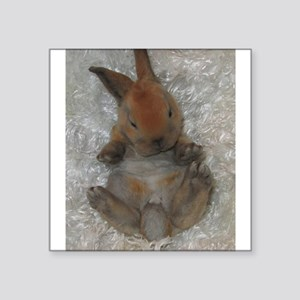 Mini Rex Baby Sticker