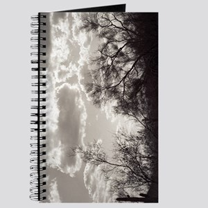 Brush Backlight Southwest Photo Art Journal