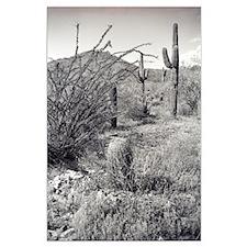 Cowboy Garden Desert Posters