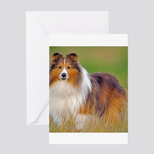 Shetland Sheepdog 01 Greeting Cards