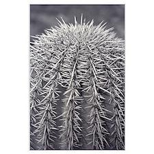 Buzz Cut Cactus Posters
