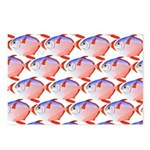 Opah Pattern Postcards (Package of 8)
