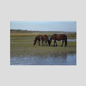 Shackleford Ponies Rectangle Magnet