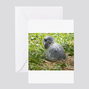 Baby Bunny Greeting Cards
