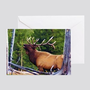 The Bugler Greeting Cards