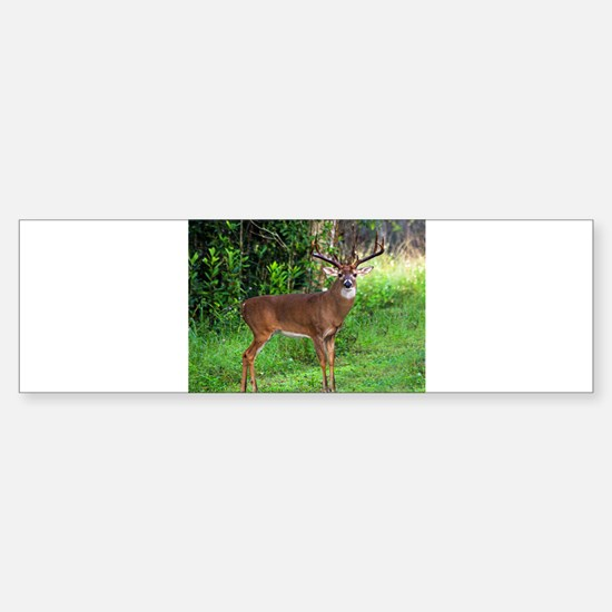 Unique Deer Sticker (Bumper)