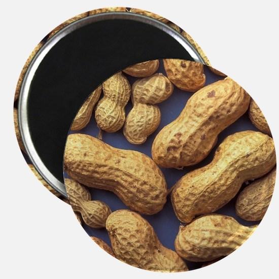 Peanuts Magnets