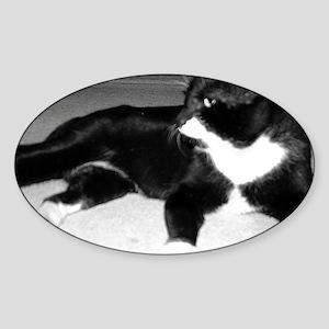 Photos Oval Sticker