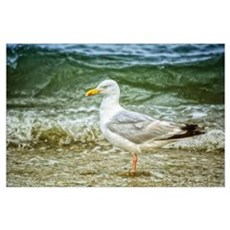 Seagull by the sea Wall Art Poster