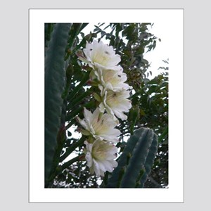 Cereus Blooming Small Poster