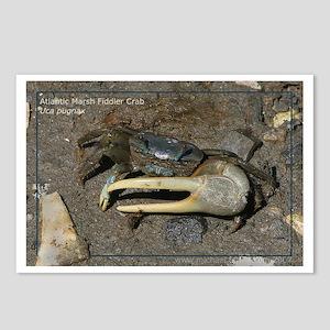 Fiddler Crab Postcards (Package of 8)