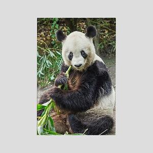 Panda Bear 1 Magnets