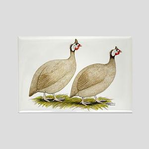 Guineas Buff Dundotte Fowl Magnets