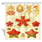 Vintage Haeckel Starfish Seashore Shower Curtain