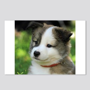 IcelandicSheepdog-Puppy F Postcards (Package of 8)