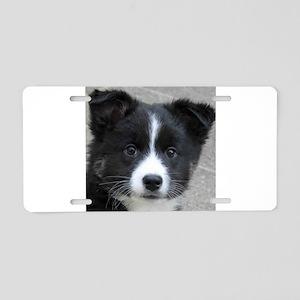 IcelandicSheepdog007 Aluminum License Plate