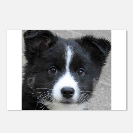 IcelandicSheepdog007 Postcards (Package of 8)