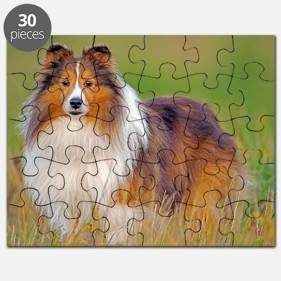 Shetland Sheepdog 01 Puzzle