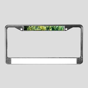 Snorkeling 3 License Plate Frame