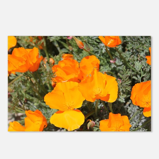 Bright Orange Poppies Postcards (Package of 8)