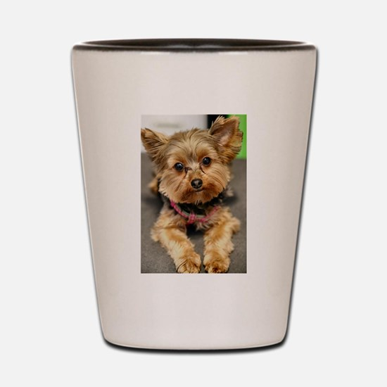 Cool Yorkshire terriers Shot Glass